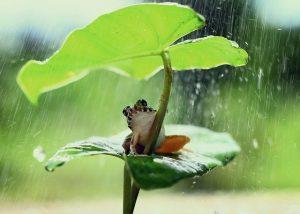 Frog Green Leaf Frog Frog Frog  - sirridho / Pixabay